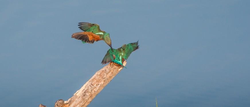 Publication Image et Nature