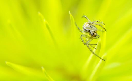 SpiderHFR