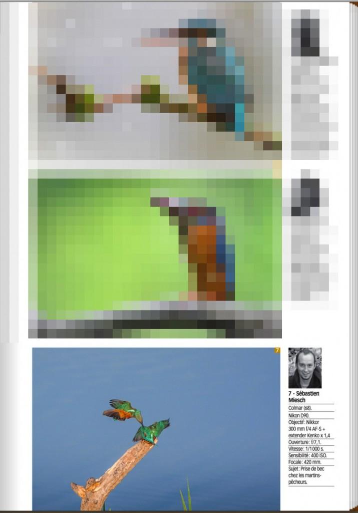 Publication-Image-Naturebis